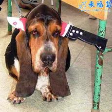 Pobre perro2