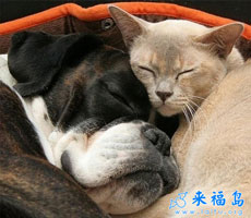 Cats and dogs are very similar