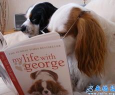 Nos gusta leer.