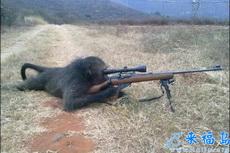 当兵的人越来越少,连猴子都去参军了……