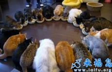 一群训练有素的猫咪