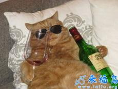 让我们干了这杯酒,好男儿胸怀像大海。