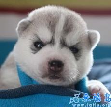 Qué perrito tan mono!!