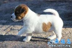 最有爱的小狗,没有疑问吧,因为