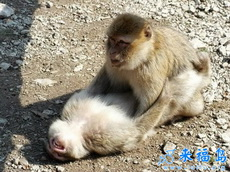 原来猴子跟人是一模一样的