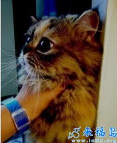 被主人嚴刑逼供的貓咪!