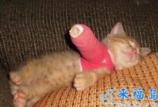 爪爪受伤了!以后再也不放鞭炮了