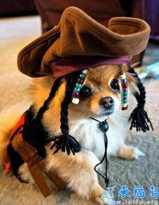 海盗船长家的狗狗
