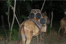 明天去草原骑马,哥哥说他要一路播最炫民族风