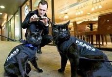 在警犬之后,警猫终于华丽登场!!