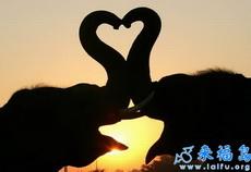 大象之间的爱情也是可以很浪漫唯美的