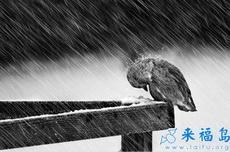 即使再大的风雨我也不会退缩