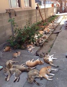 猫咪的避暑圣地