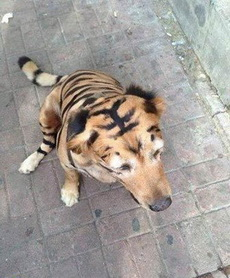 这年头土豪都养老虎了,我怎么能落后呢?