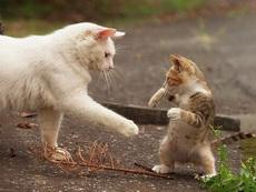 别怕,来,握握手