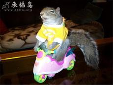 快乐松鼠骑车车