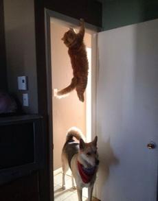 咦,猫咪跑哪里去了