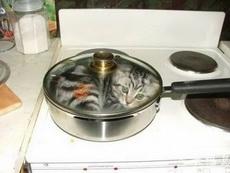 主人说想吃猫肉