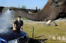 主人,看我洗车多干净