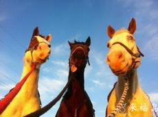 这三匹马的表情好可爱