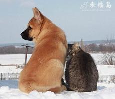 True Friends Always Have Each Other
