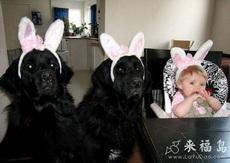 狗狗戴上这个兔耳瞬间就萌了