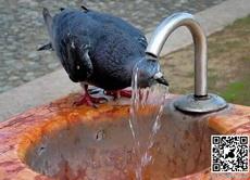40度高温下冲个凉水澡最爽了