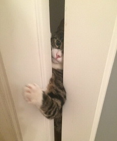 上厕所不让它进来,他就这么盯着我