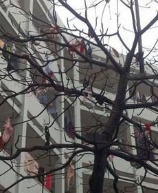 女生宿舍旁邊的樹,這些妹子是要鬧哪樣啊