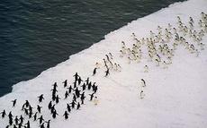 南极打群架,场面好壮观