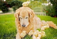 小鸡鸡们,你们真心认错麻麻了!