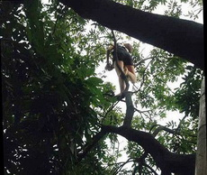 奔放的女漢子又上樹了!