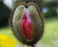 此花只应天上有