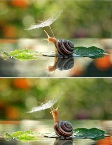 打伞的蜗牛