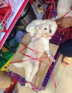 兽医简直绳艺过人,昨天有网友拍到这只打吊针的狗狗,此汪一脸生无可恋