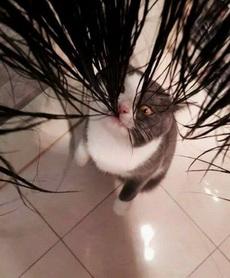 我只是想洗个头,要不要这样啊