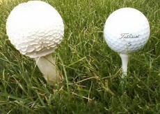 高尔夫球场里,一棵被耳濡目染了的菇