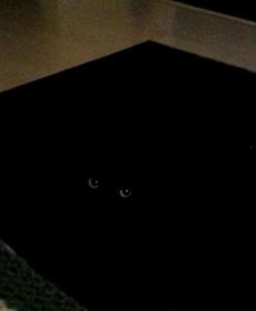 一位网友回家发现自己养的猫咪不见了,在他焦急万分的时候,突然发现在地毯上,一只眼睛正盯着他