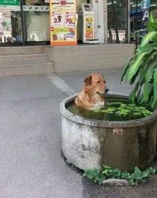 露天澡堂!