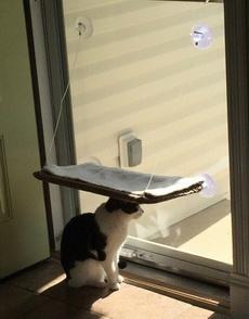 网友为了让他的喵舒服的晒太阳,给它买了个小吊床,结果。