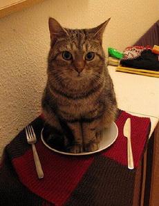 主人,开吃吧!我准备好了
