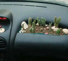 汽车副驾操作台的正确用法—期待急刹车