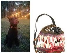 地狱恶犬速成嚼子