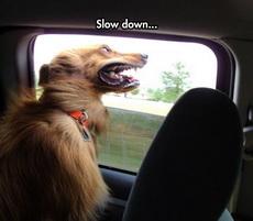 慢一点啊,开得太快了