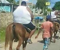 心疼这只马,它肯定在心里哭泣