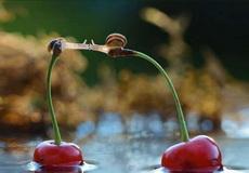 热恋中的两只蜗牛