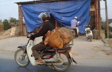 """牛人摩托车载牛!一个字""""牛"""""""