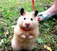 貓兄,我可不是老鼠