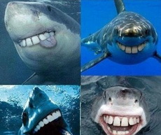 鯊魚沒有尖牙齒就可愛了