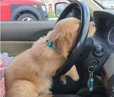 喂!疲劳驾驶啦!